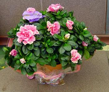 Комнатные цветы фото - фото комнатных цветов - цветы названия фото.